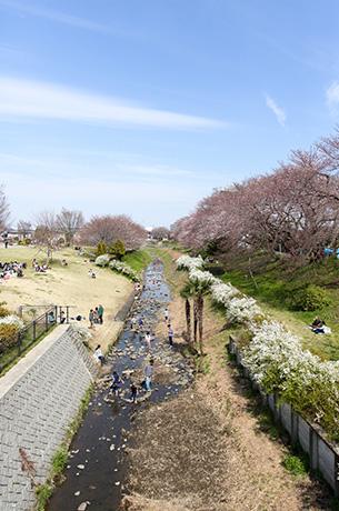 県立相模川公園