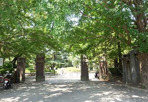 松戸中央公園