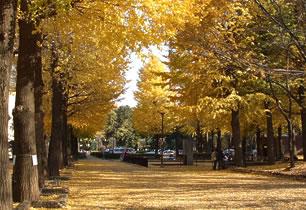小平市立中央公園