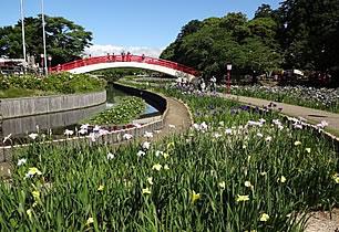 賀茂しょうぶ園